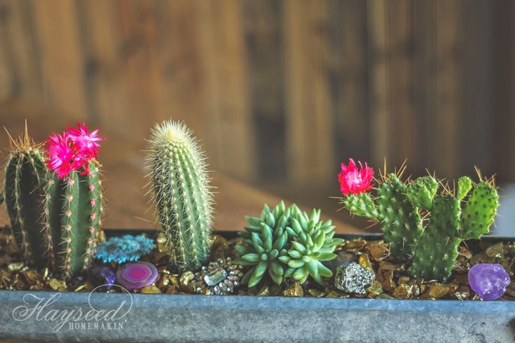 Mini Cactus & Succulent Garden with Gold Stones & Brooches | Hayseed Homemakin'