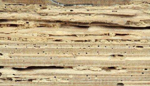 Disinfestare i mobili dai tarli è fondamentale per salvaguardarli dagli ingenti danni causati dai parassiti. Ecco 5 rimedi naturali per combattere i tarli