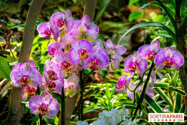 Mille Et Une Orchidees Au Jardin Des Plantes 2020 Video