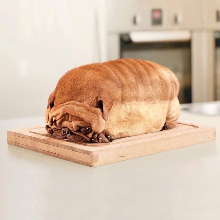 OMG!!!! This dog looks like a loaf of bread