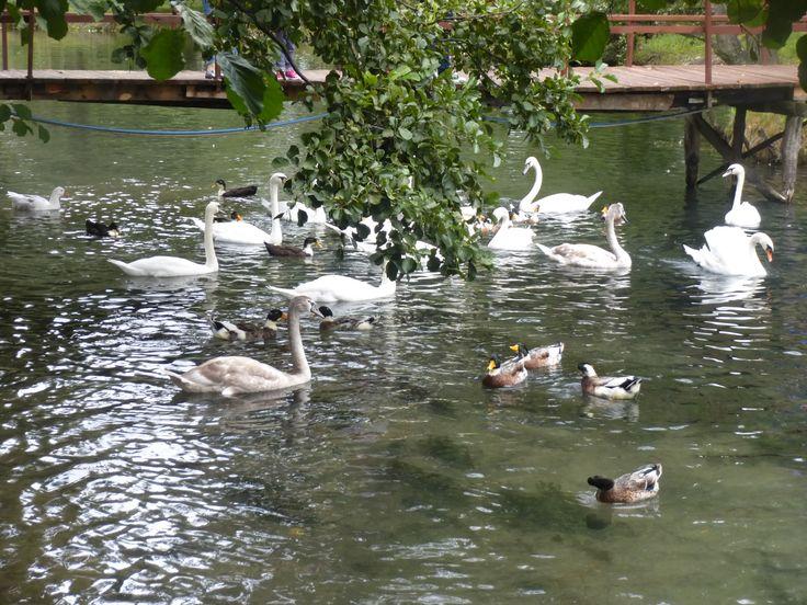 Parco Drilon sul lago #Ohrid