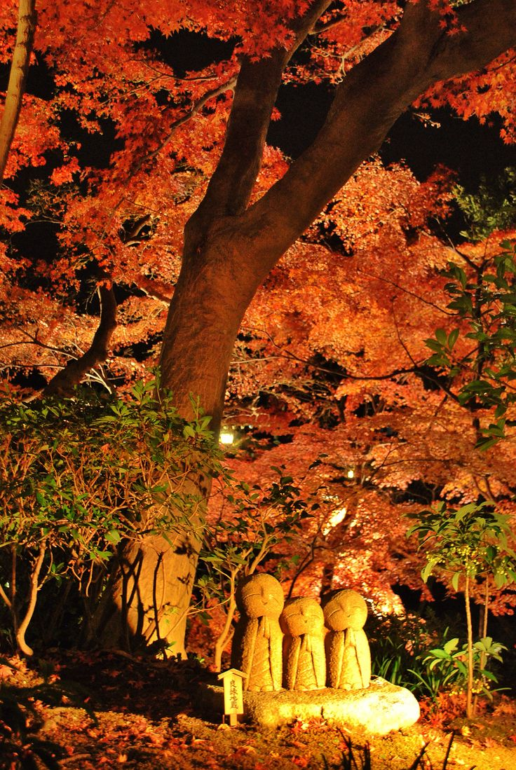 Hase Temple in Kamakura light up autumn 鎌倉 長谷寺 ライトアップ 紅葉