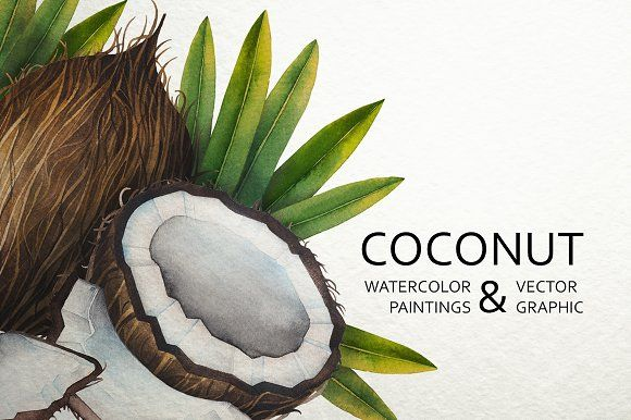 Watercolor And Graphic Coconut By Ekaterina Glazkova On