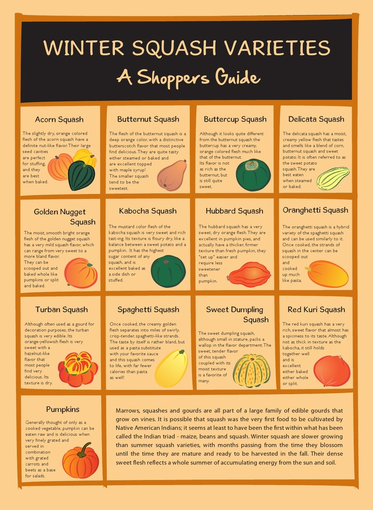 A Guide to Winter Squash Varieties!
