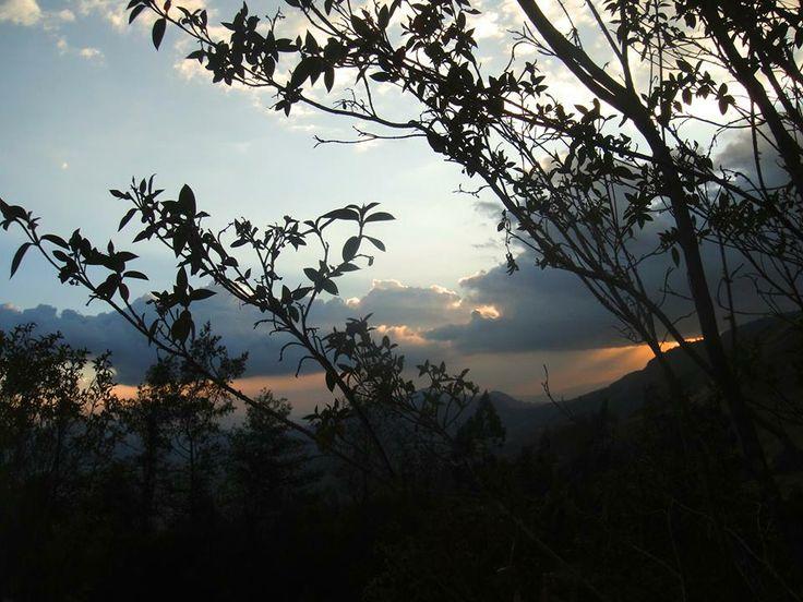 La Tierra brilla y se viste de verde. -Reserva Natural El Paraíso-