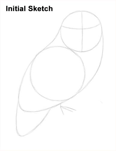 Snowy Owl Drawing Sketch                                                                                                                                                                                 More