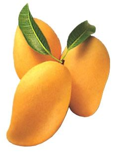 Send delicious mangoes to India from our online store at Tajonline.com. For more information click here: http://www.tajonline.com/gifts-to-india/gifts-FMA02.html