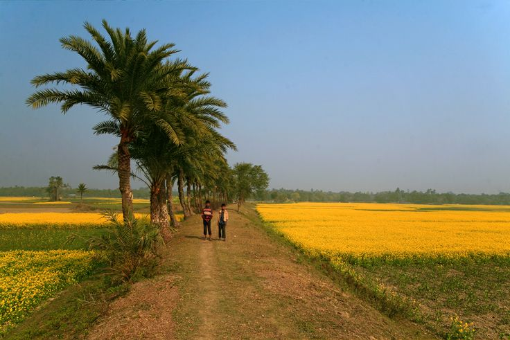 Image result for bangla  nature pictures