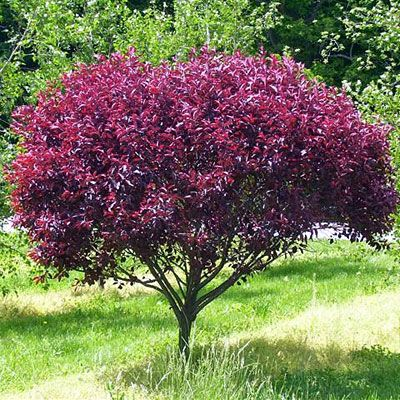 Planting for All Environments. Need plants that do well in the shade? Maybe you want something that turns purple in the fall. Here is a list of plants for almost any environment.