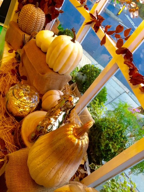 2016 Prestige Paws dog Grooming & Styling Lounge Autumn display