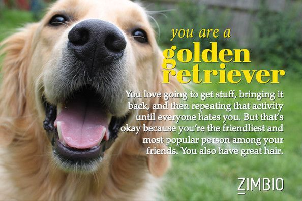 I took Zimbio's 'What Kind of Dog Are You? quiz and I'm a Golden Retriever!! What kind are you?
