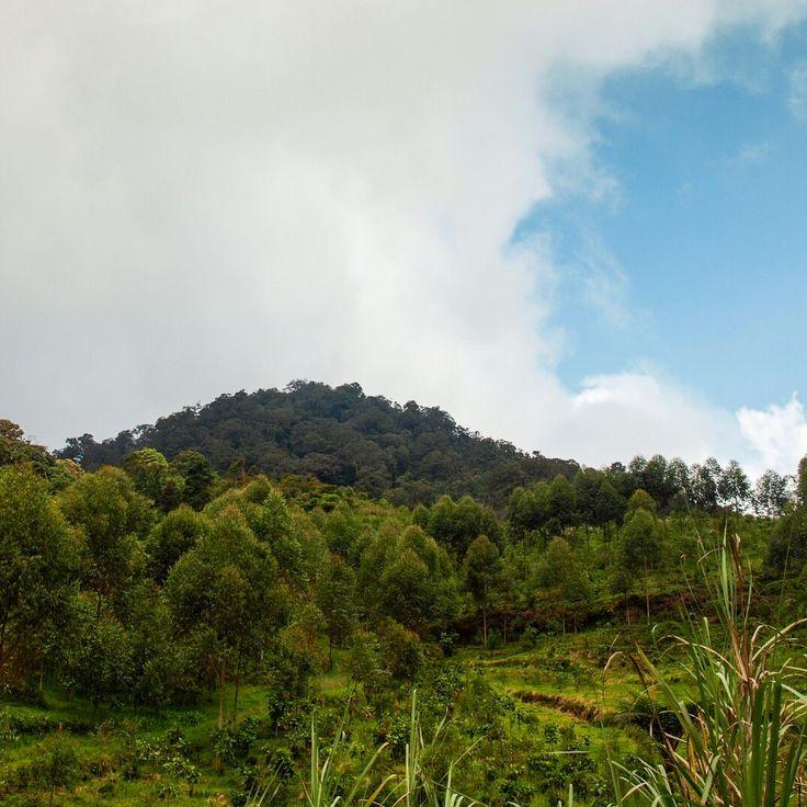 G Sanggara +1903 mdpl  Terletak di utara Bandung, memiliki puncak yang tidak terlalu lebar, dengan tanda tulisan puncak dan terdapat nisan sebagai peringatan pernah terjadinya kecelakaan.  #tropicalwilderness #gunungindonesia #gunungbandung #trekking #fotografialambebas #fotonesia #wildernessphotography #gooutside #getoutside #goaroundbandung