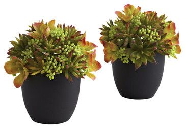 bright chartreuse for Family room  Mixed Succulents with Black Planters, Set of 2 - transitional - Artificial Flowers - Covered In Style Inc