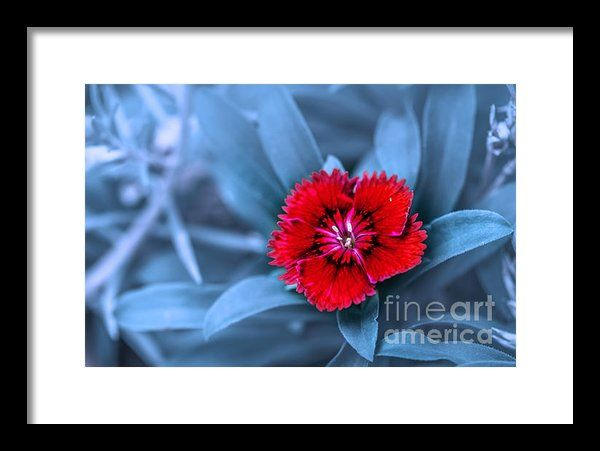 I Am Red Framed Print By Charuhas Images