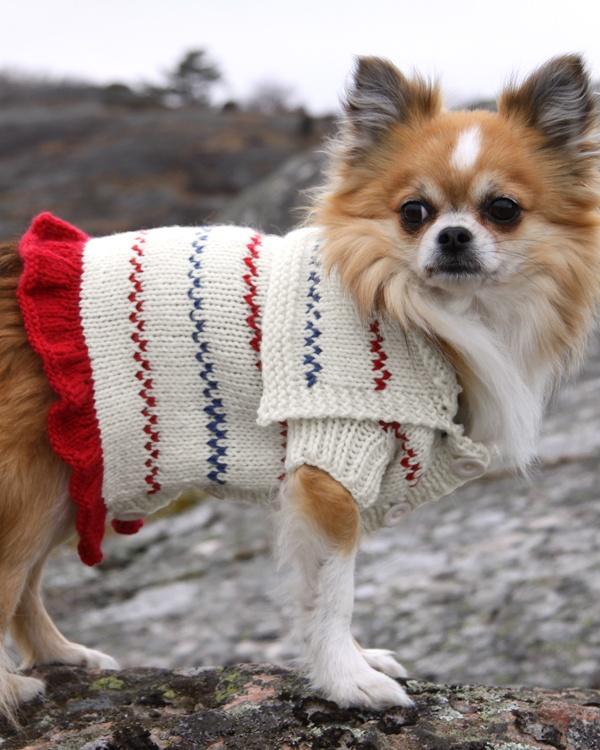 Hundtröja till små hundar  #knittingroom #stickat #garn #vinter