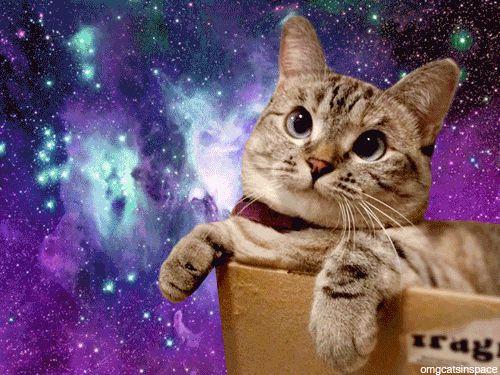 Cat Pizza Galaxy Meme