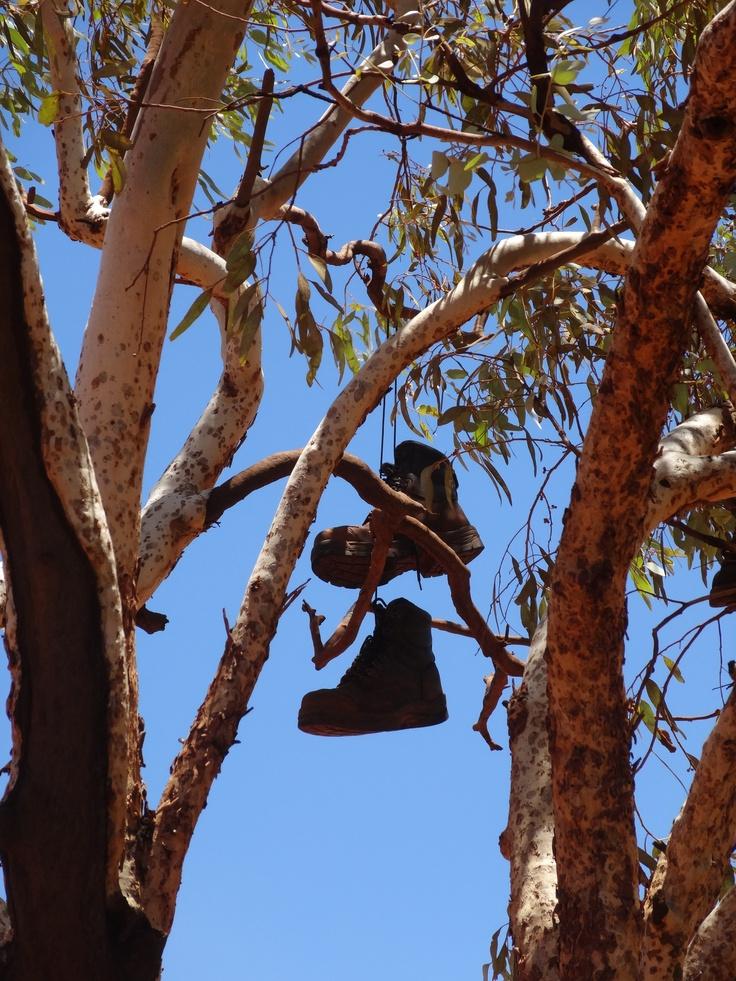 When miners hang up their boots, this is exactly what they do. A gum tree in the iron ore mining village is filled with old work boots that are hurled into the tree by those finishing on the minesite.