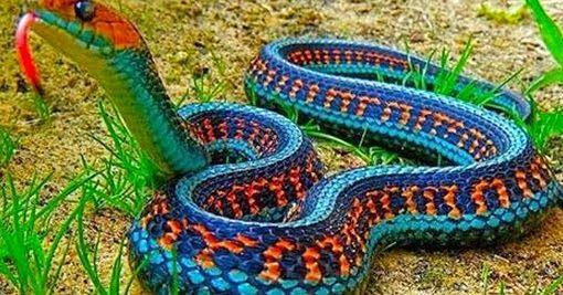 Aparece serpiente en México que no se veía desde hace 78 años | Noticias