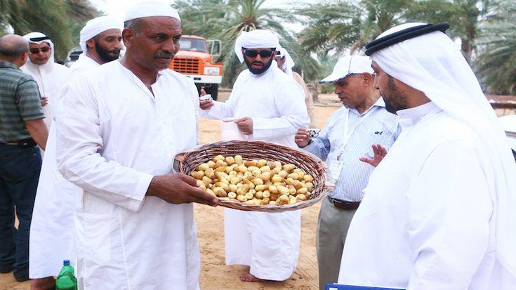 The ILO in the United Arab Emirates (Arab States)