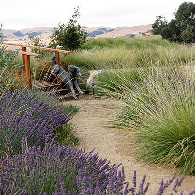 Great mix of lavender and wispy grass - natives to Northern California and easy to maintain. Low water usage.