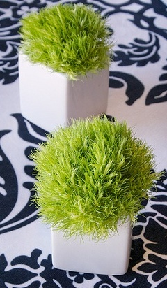 17 Best Images About Dianthus Green Ball On Pinterest Ferns Centerpieces And Phalaenopsis Orchid