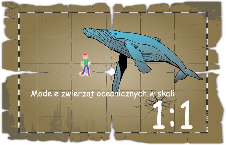 ocean park władysławowo