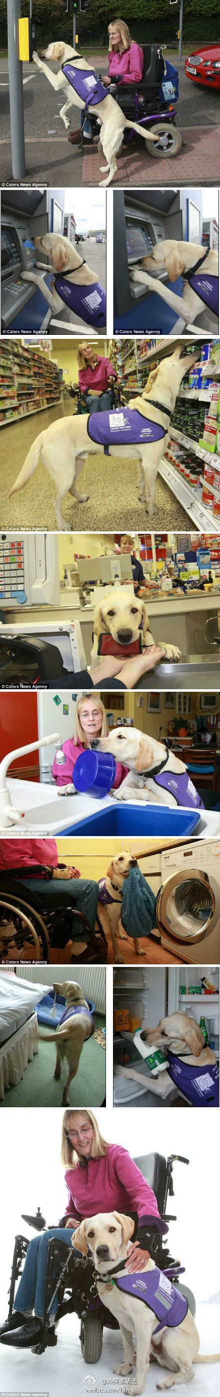 Heartwarming... the many ways a service dog helps his owner. This dog is amazing!