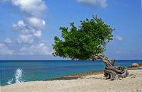 Aruba: una isla feliz con las mejores playas del caribe