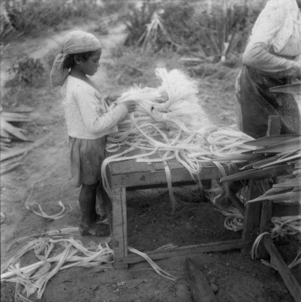 Desfibramento Do Sisal Em Irece Ba 1962 Sisal Bahia