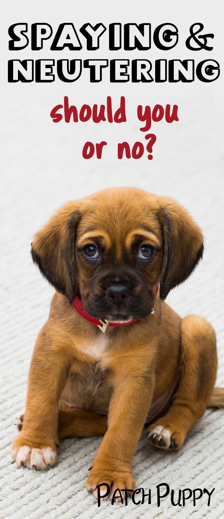 Spaying And Neutering It S Not An Easy Question To Answer Dog Health Tips Neutering Dogs Dog Spay