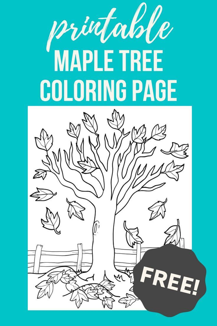 Maple Tree Worksheet Education Com Cool Coloring Pages Coloring Pages For Kids Tree Coloring Page