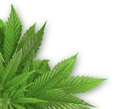 420 Web Pros - Marijuana Web, Print, & Online Marketing  Since 2009 we've provided digital business solutions exclusively to the cannabis industry.  www.420webpros.com  #Marijuana_web_design