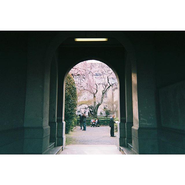 【fuyuno12】さんのInstagramをピンしています。 《何撮ったか覚えていない写ルンですを現像出したら去年の春の京都の写真が出てきた。 同じ桜を見てると花のつきが毎年違って今年は元気だなとかその逆も、生き物なんだって改めて思う。 府庁の枝垂れ桜とても好き。 円山公園の枝垂れの孫木っていうのもまたいい。》
