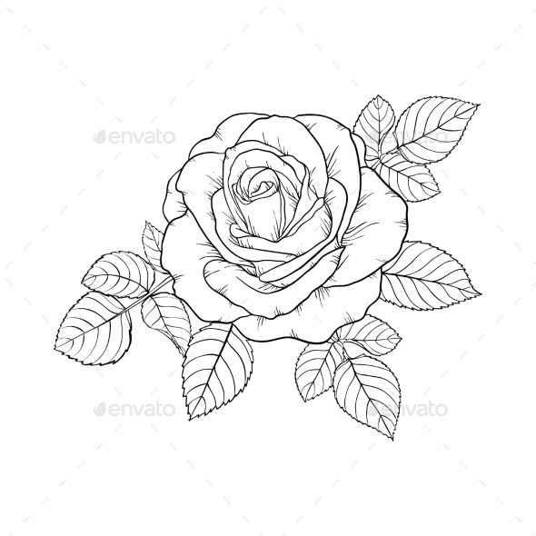 Black And White Rose And Leaves Roses Drawing Flower Drawing