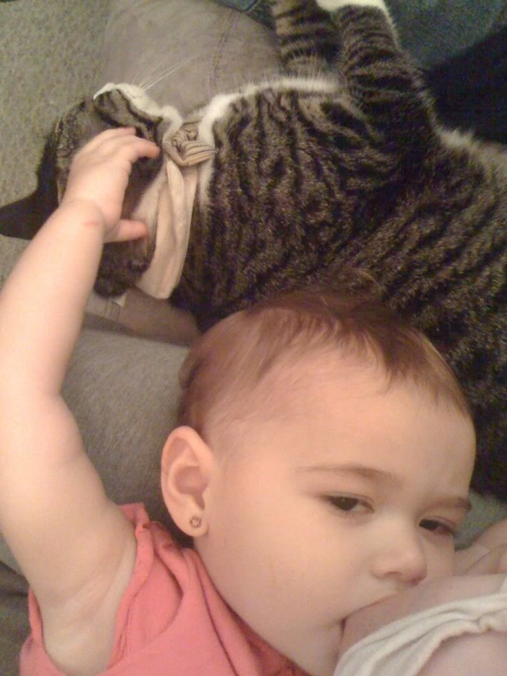 18 month old toddler breastfeeding and patting her cat at the same time, naww :): Cat, Photo Credit, Extreme Breastfeeding 2, Baby First Years, 18 Months, Breastfeeding Babywearing, Toddlers Breastfeeding, Baby Stuff, Amazing Breastfe
