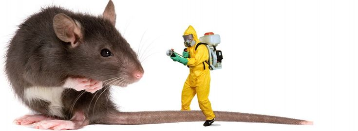 We have been in this industry for 25 long years and we  know exactly how to put your pest to rest using eco-friendly products.