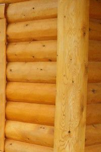 What are the differences between Northern White Cedar and Red, White and Yellow Pine when building a log home or log cabin?