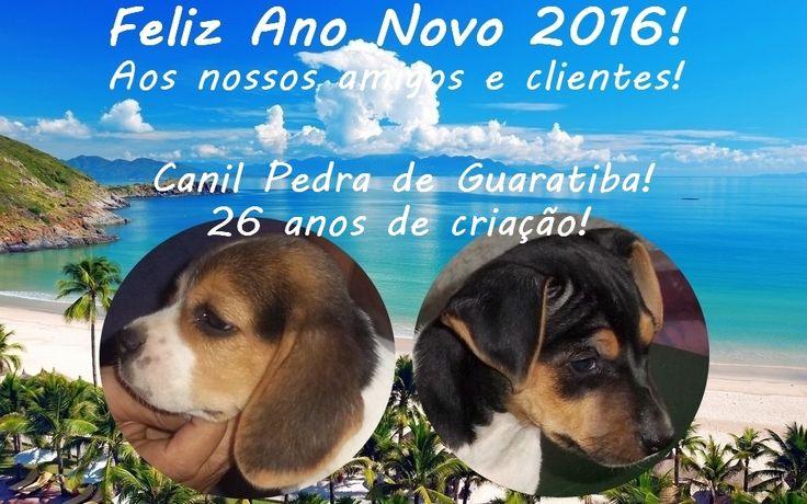 TERRIER BRASILEIRO (FOX PAULISTINHA) E BEAGLE! Feliz Ano Novo! Facebook: http://pt-br.facebook/canilpedradeguaratiba Instagram: http://instagram.com/canilpguaratiba  #canilpedradeguaratiba #beagle #foxpaulistinha  #terrierbrasileiro