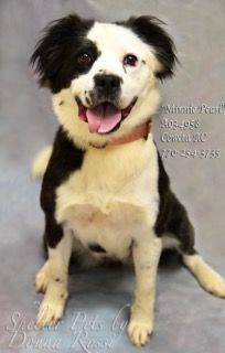 UPDATE 7/4/17 TAKEN OFF LIST  **MINNIE PEARL**  7/2 LISTED Dogs for adoption,euthanization,rescue,sponsor