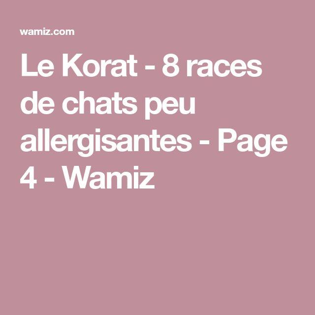 Le Korat - 8 races de chats peu allergisantes - Page 4 - Wamiz