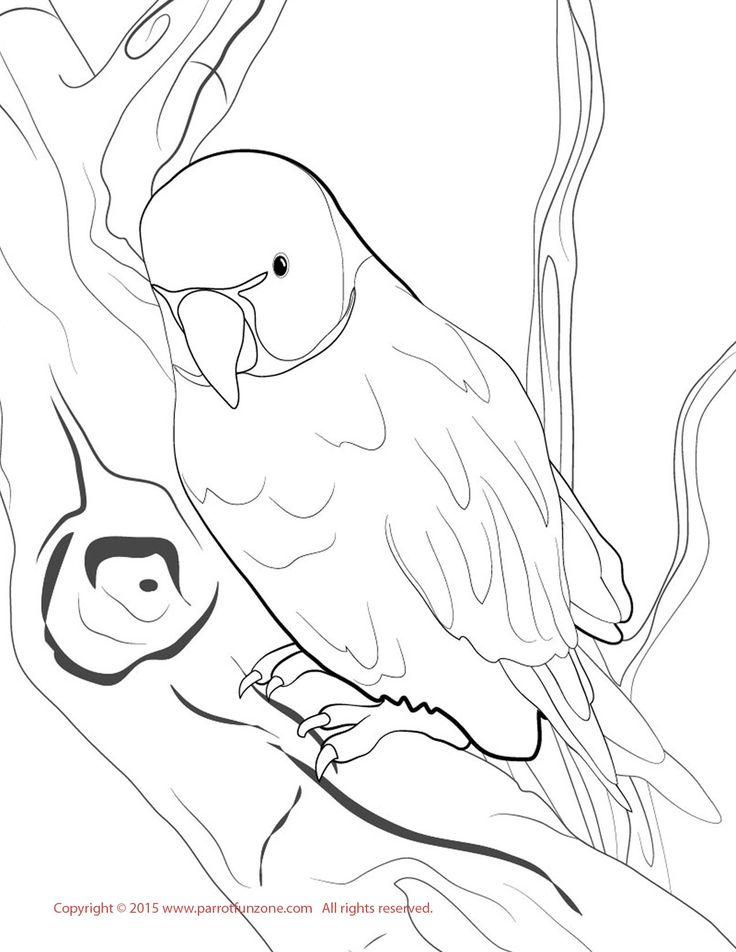 Ring-necked Parakeet Coloring Page