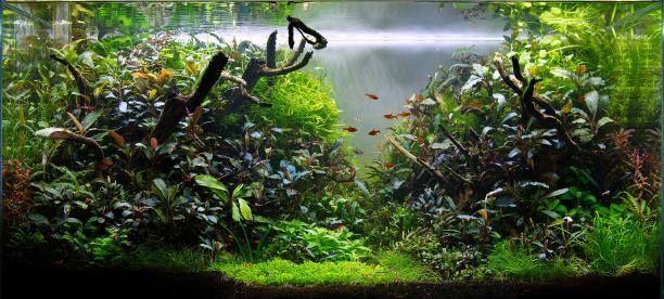 http://www.aquagoin.com