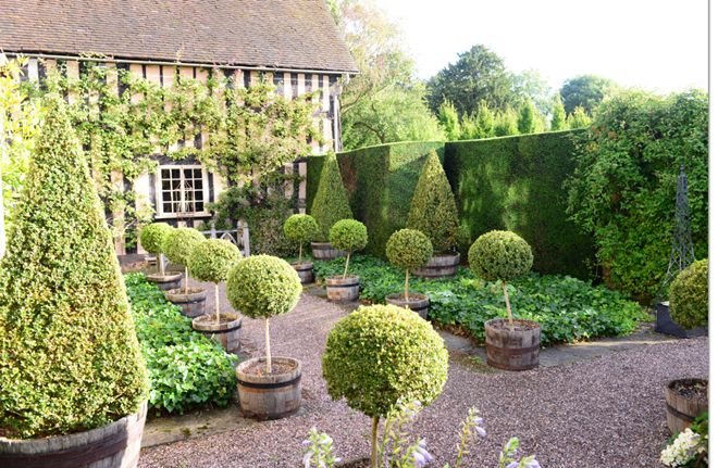 Topiaries at the Wollerton Old Hall gardens