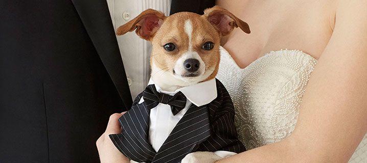 Pet Friendly Weddings: Including Pets in Big Day Plans   PetSmart