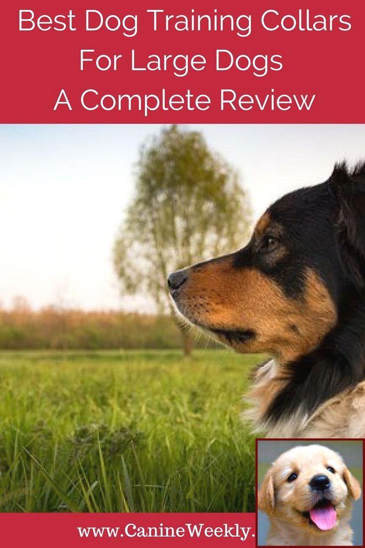 Dog Behavior When Your Pregnant And Dog Behavior Correction Collar