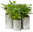 A stylish cluster of pots for the patio