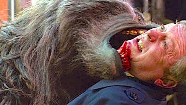 Os ataque de animais selvagens - animais selvagens - Lobos em ataques se...