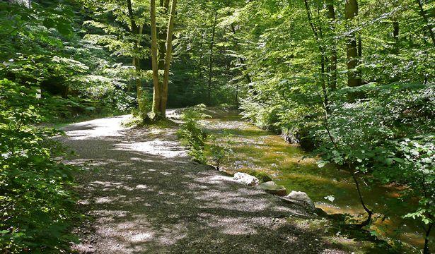 Wanderung durch die Maisinger Schlucht, Wanderweg von Starnberg zum Maisinger See, Wandern am Starnberger See