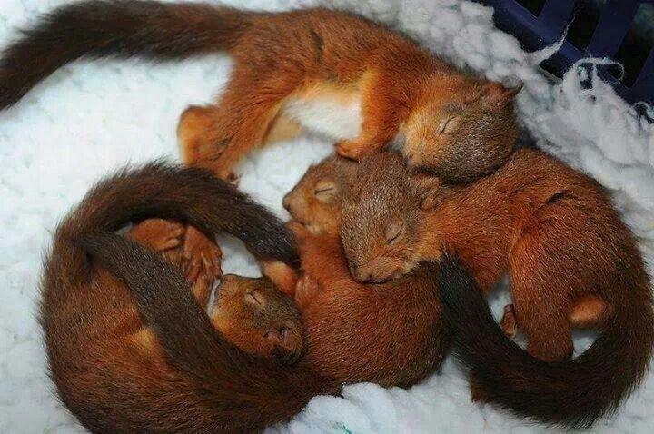 Bundle of Cuteness!