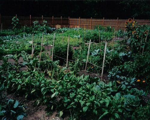 10 inspiring urban gardens. And a link to lots of resources on urban farming: http://pinterest.com/organicconsumer/urban-gardening/
